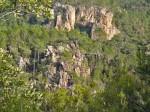 Blavet pine trees in the ravine
