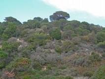 Lardier Pine forest