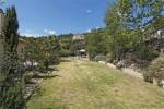 Mourvedre garden a