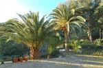 Aurelia palms 2.